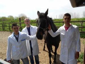 603153 veterinari-4svilajnacg.j. origh